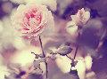 blooming~